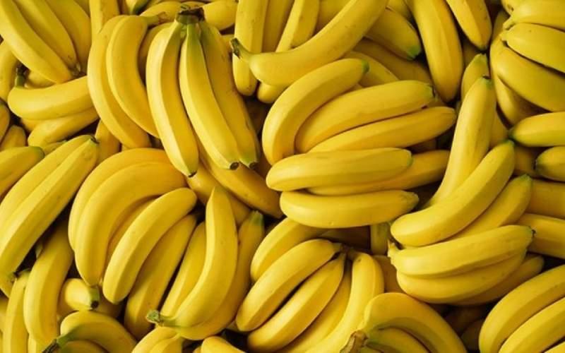 واردات غیرمجاز ۱۴۷هزار تن موز در ۱۵ماه گذشته