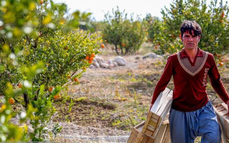چند راهکار برای کاهش خشکسالی در باغات