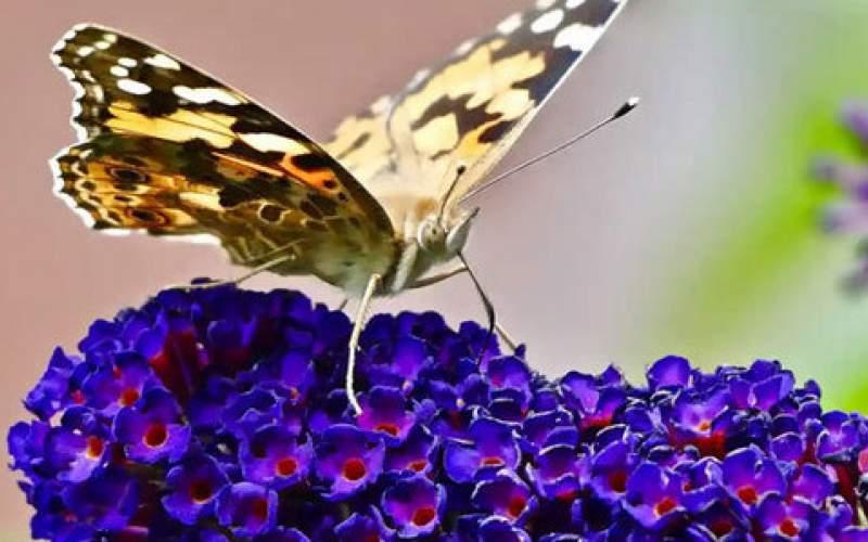 تصاویری جالب از حیات وحش