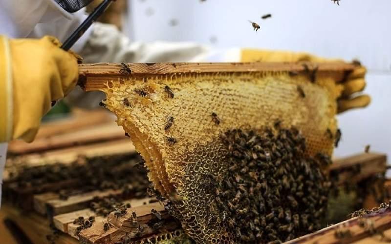 زنبوردار مشکل تامین شکر دارد