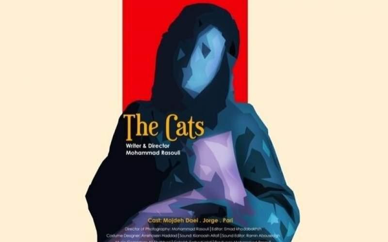 «گربهها»ی ایرانی مسافر آمریکا شدند