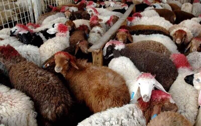 افزایش دوباره قیمت گوشت قرمز