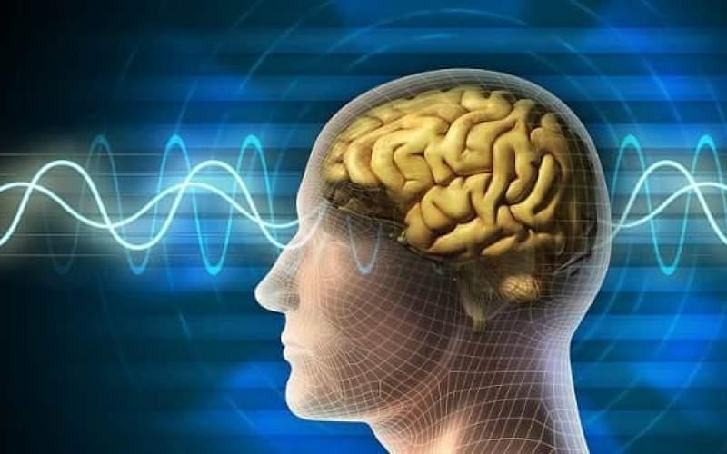 ۴ عاملی که باعث کوچک شدن مغز میشوند