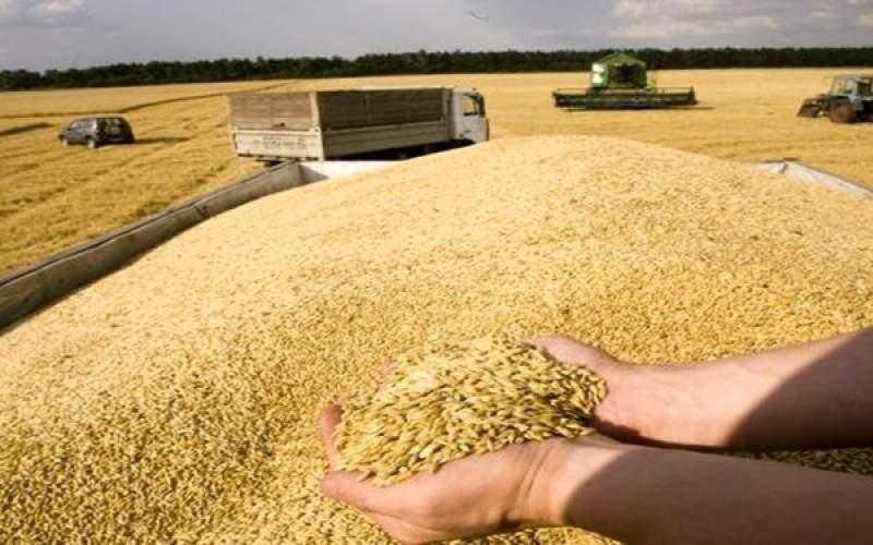 نیاز به واردات 5 میلیون تن گندم در سال جاری