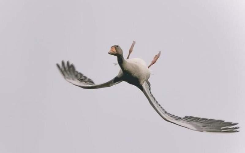 غازی که تصمیم گرفت وارونه پرواز کند