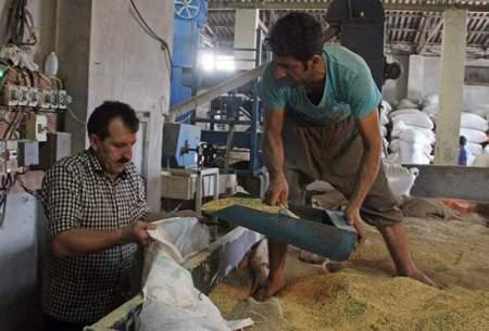 سود فروش برنج گران در دستان دراز دلال