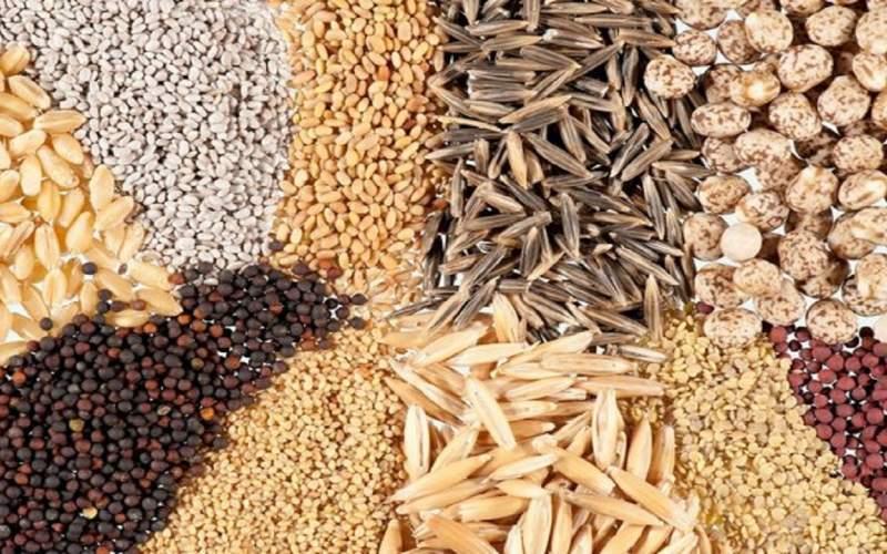 صادرات بذر برای اولین بار از کشور