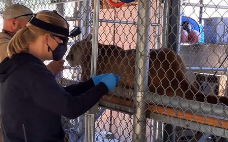 حیوانات باغوحش آتنلانتا واکسن دریافت میکنند
