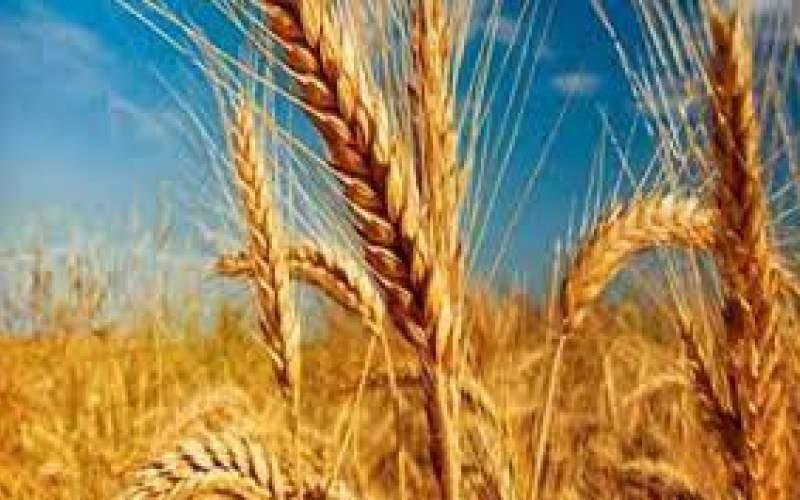 طرح «جهش تولید در دیمزارها» تدوین شد