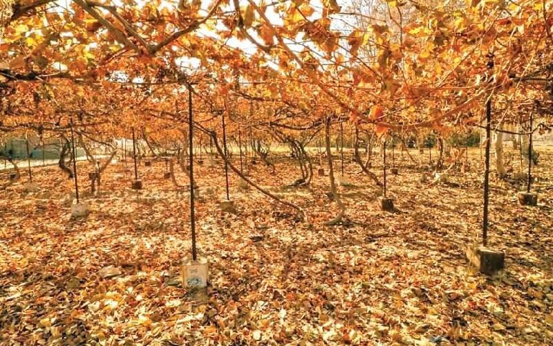 ادامه خشکسالی در ماههای ابتدایی پاییز
