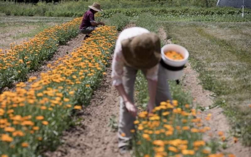 گیاهان دارویی 5 درصد گران شد