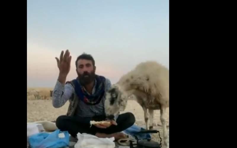 ویدئویی از نتیجه لایو گذاشتن چوپان اهل ترکیه