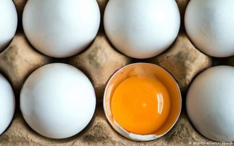 چرا قیمت تخم مرغ دوباره گران شد؟