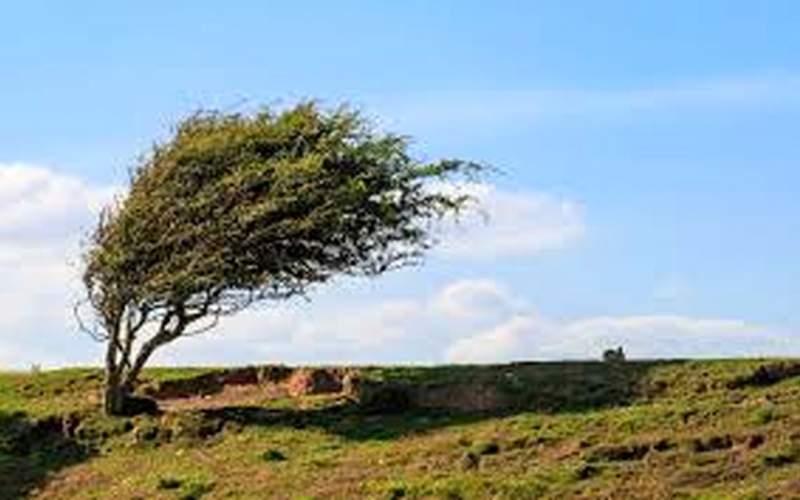 وزش باد نسبتا شدید در بخشهایی از استان تهران