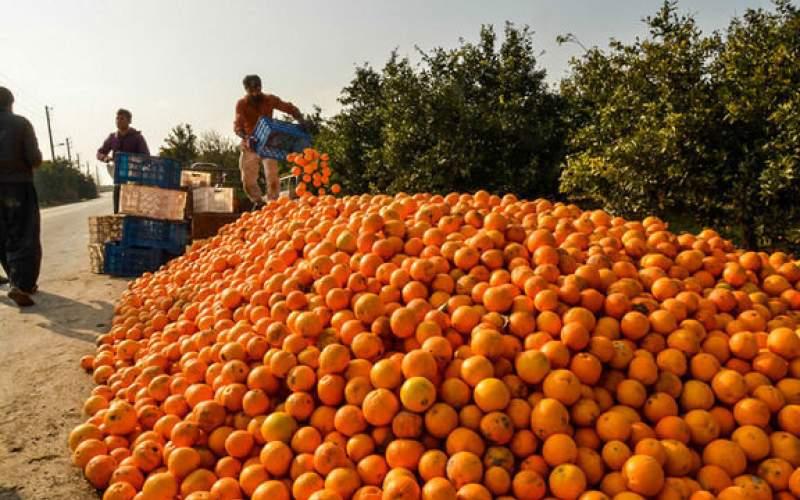 گران ترین میوه بازار کدام است؟/کمبود هندوانه