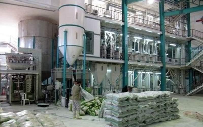 رکود در شالیکوبیهای مازندران