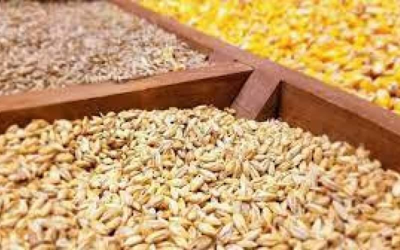 قیمت جهانی نهادههای دامی۵۰درصد افزایش یافت