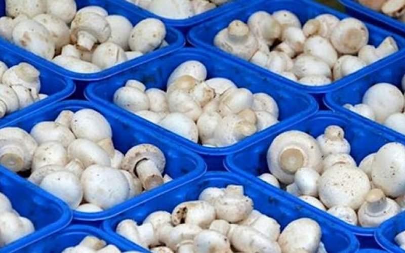 ظرفیت ۶۰ هزار تنی صادرات قارچ ایران