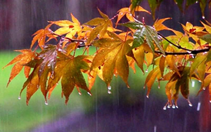 بارش باران های رگباری در 8 استان کشور