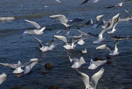 محدودیتهای کرونایی به نفع پرندگان بوده است