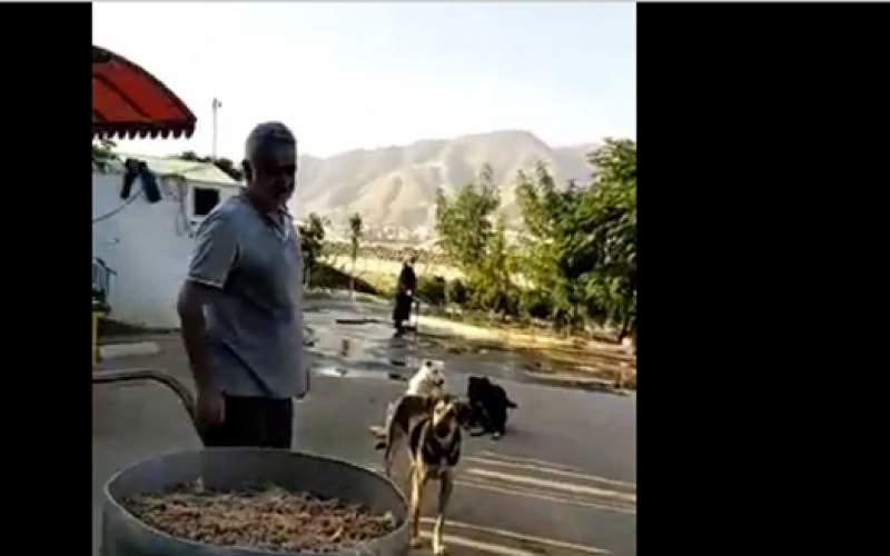 دهکده مهربانی مردم تهران برای سگها