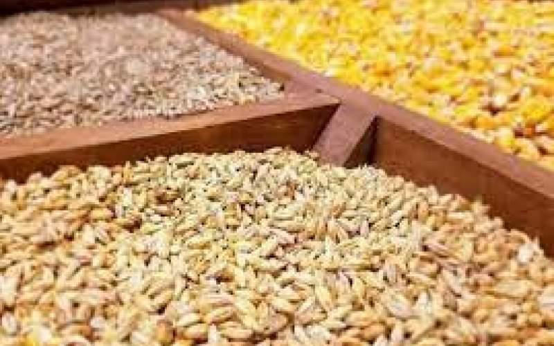ادامه نابسامانی در بازار نهادههای دامی