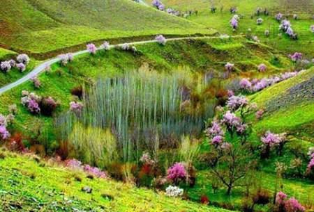 طبیعت زیبای منطقه گلدشت بروجرد