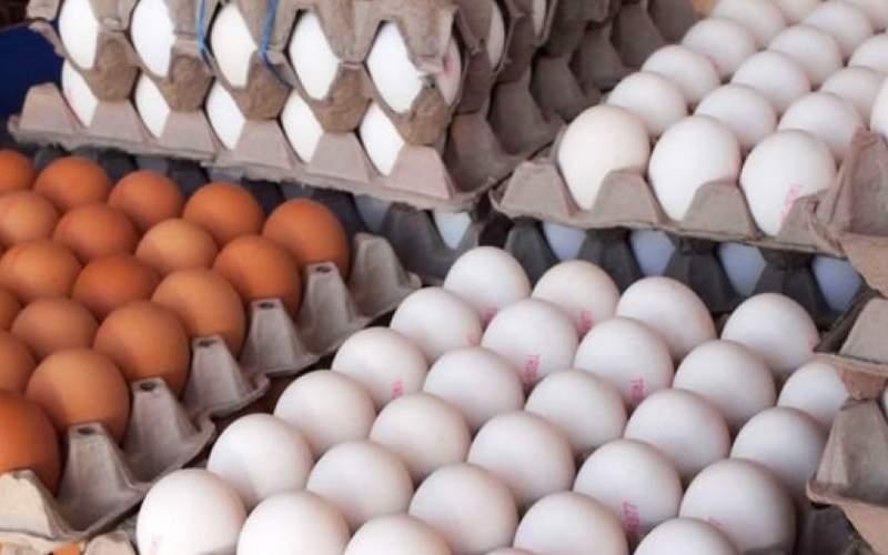 تخم دو زرده دولت برای کنترل بازار تخم مرغ!