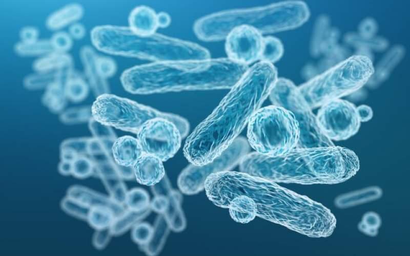 بررسی مقاومت آنتیبیوتیکی یک نوع باکتری روده