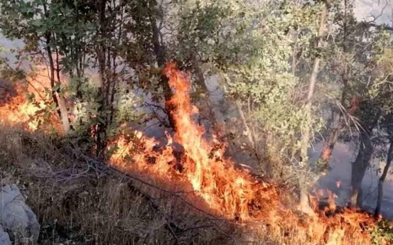 آتش سوزی در جنگلهای گناوه لری گچساران